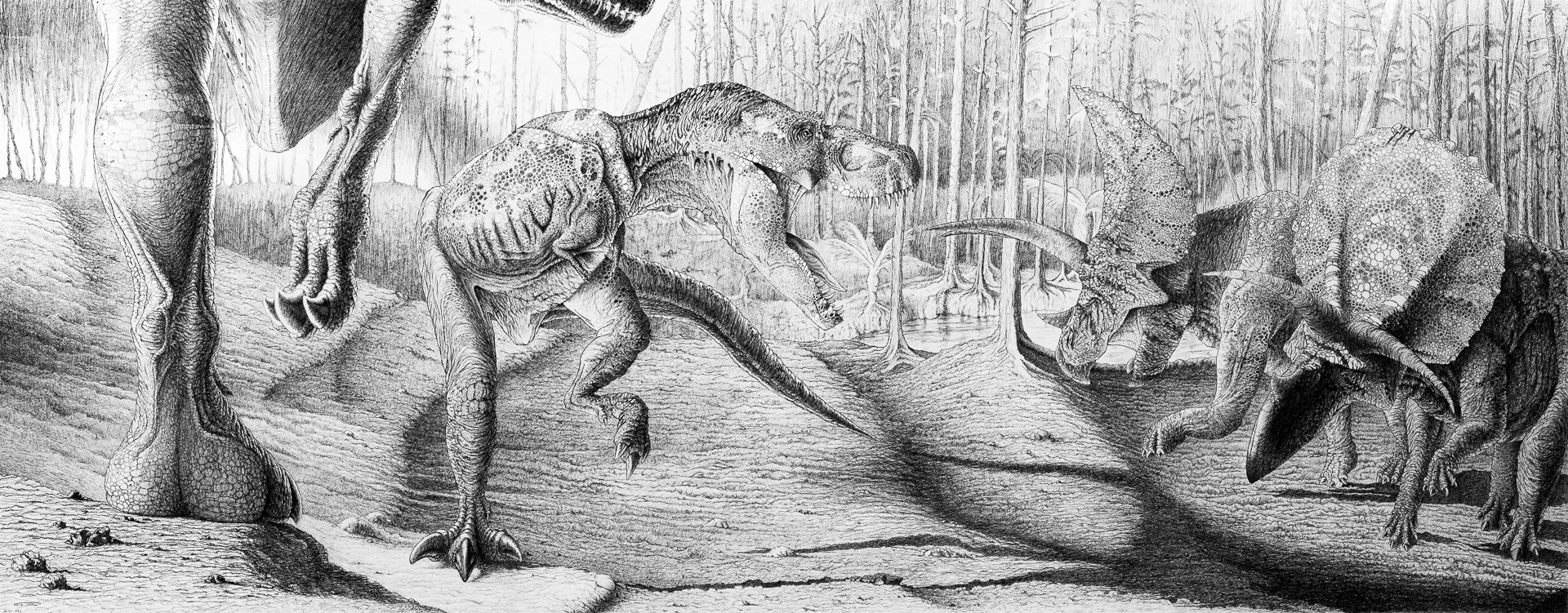 War Cry, Tyrannosaurus rex, Triceratops, forest, Cretaceous, theropod, ceratopsian, sunset, pencil sketch, gesso, black and white