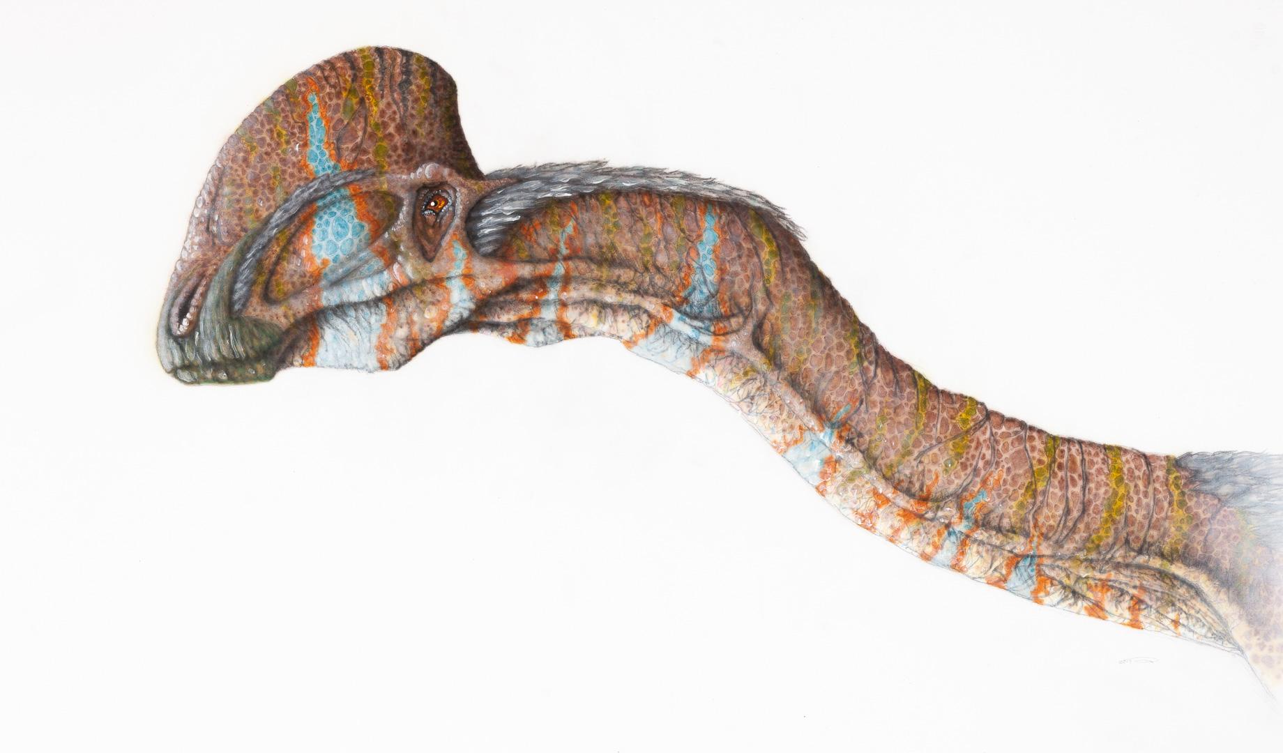 ojoraptorsaurus, head study, airbrush painting